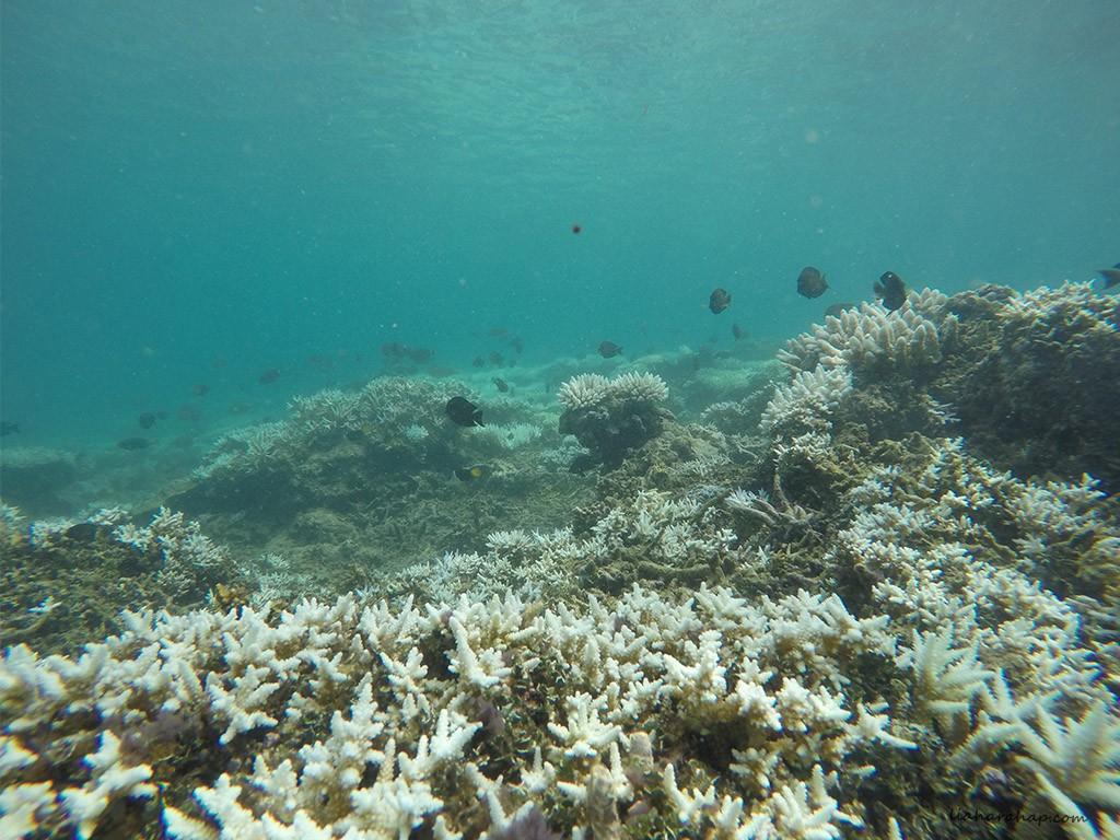 teluk-kiluan-terumbu-karang-ikan